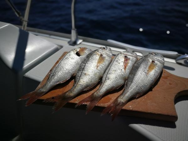 TITFS projekt ryby